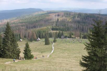 Rusinowa Polana widziana ze szlaku na Gęsią Szyję
