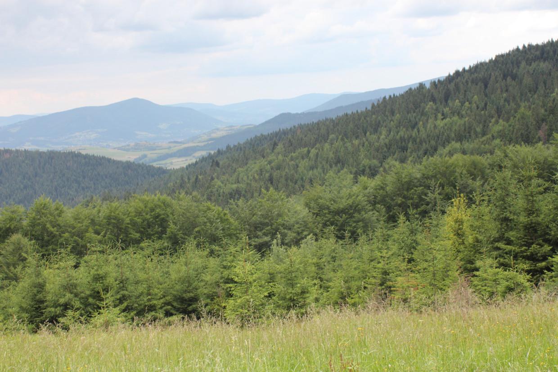 Widok z czarnego szlaku z Lubomierza